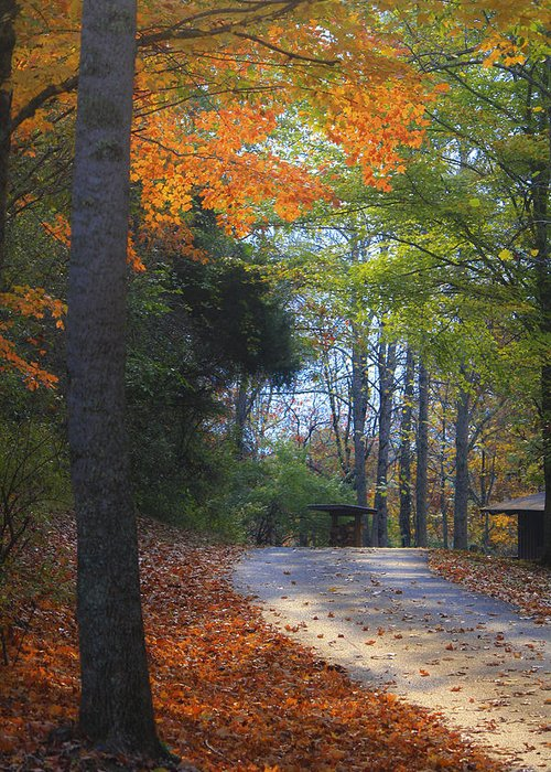 Cabin Greeting Card featuring the photograph Road To Cabin 2 by Teresa Mucha