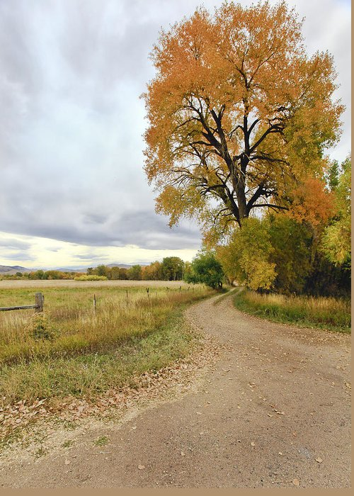 Trees. Fallcolors .big. Tree. Dirt. Road. Long. Road. Yellow. Grass. Cloudy. Storm. Green. Blue. Aspin. Yellow. Aspin Tree Phbgotography. Mixed Media. Mixed Media Photography. Colorado Fall Colors. Mixed Media Fall Colors. Fall Color Greeting Cards. Fort Collins Colorado Fall Colors. Colorado Greeting Cards.  Greeting Card featuring the photograph Road To Dads Place by James Steele