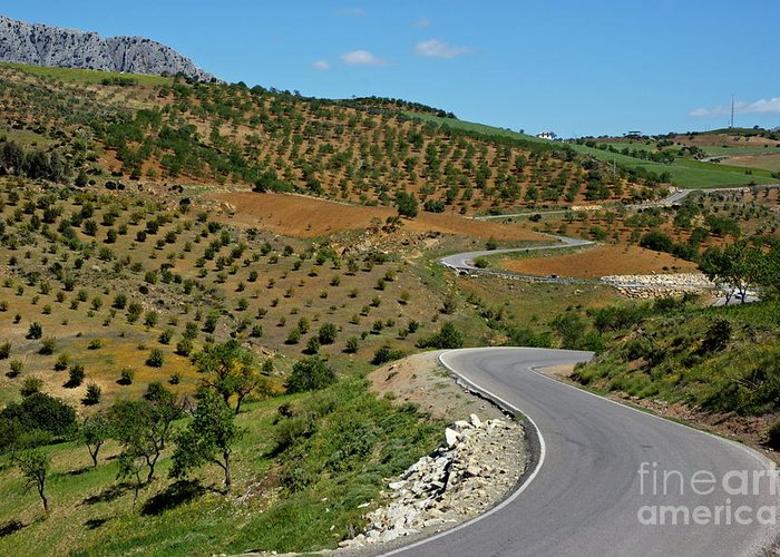 Agricultural Greeting Card featuring the photograph Road Winding Between Fields Of Olive Trees by Sami Sarkis