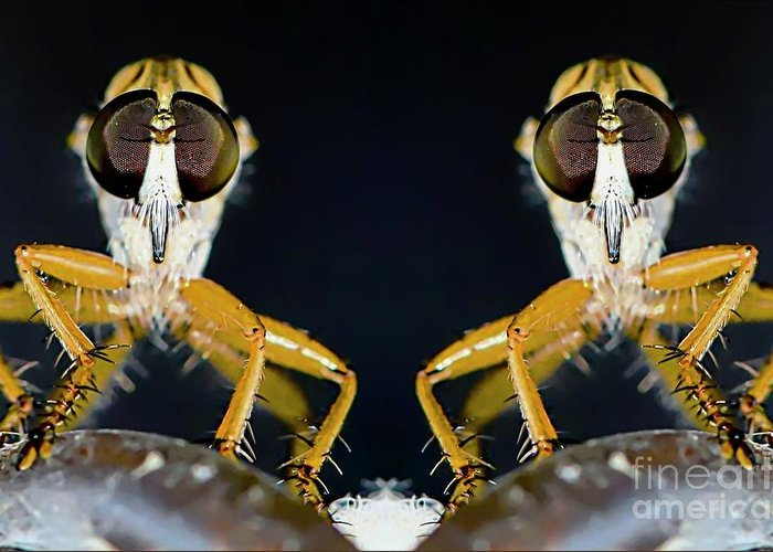 Robber Greeting Card featuring the photograph Robber Fly - Alien Visitors by Michael Moriarty
