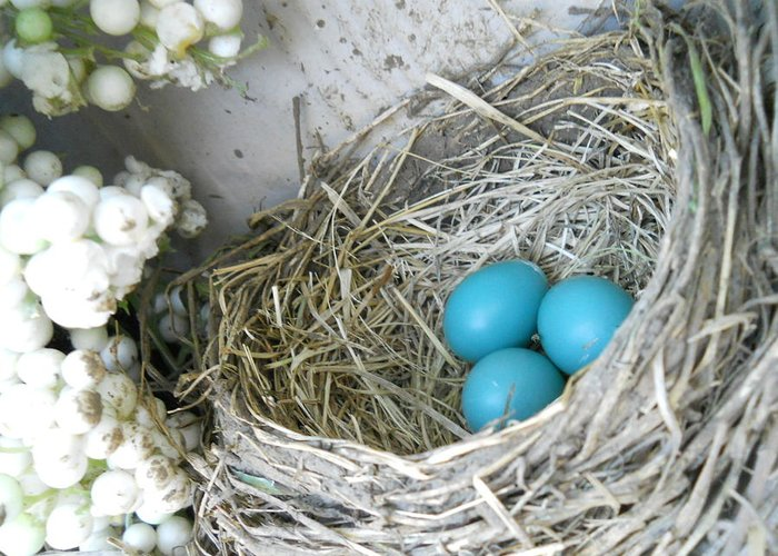 Nature Greeting Card featuring the photograph Robin Eggs In A Wreath by Marqueta Graham