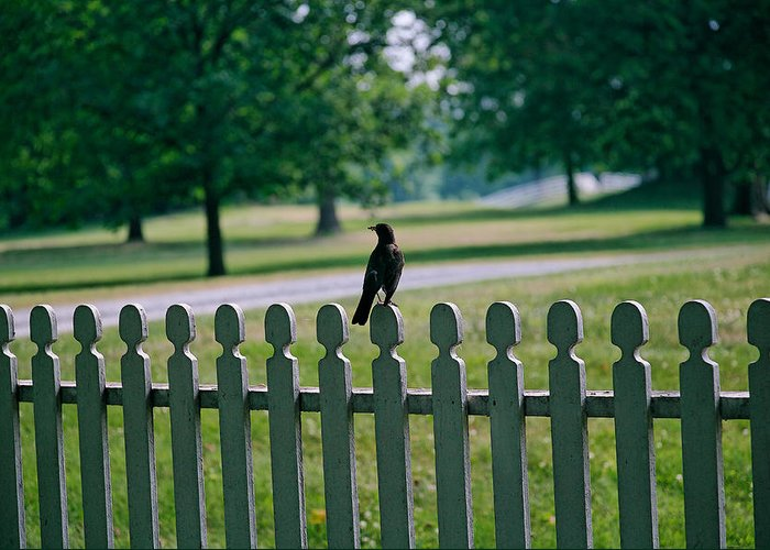 Bird Greeting Card featuring the photograph Robin On A Fence by Lone Dakota Photography
