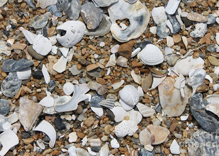 Beach Greeting Card featuring the photograph Rock N Shells by Marcie Daniels