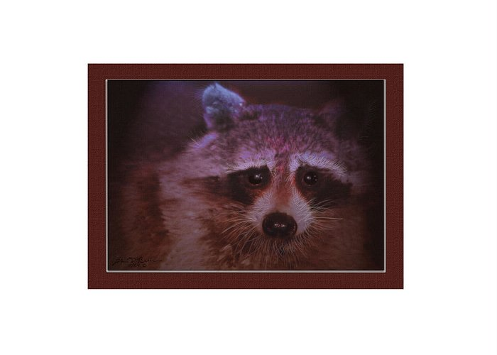 Racoon Wild Animal Greeting Card featuring the painting Rocky 1 by John Breen