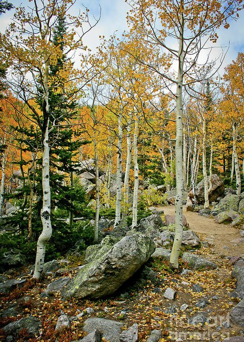 Rocky Greeting Card featuring the photograph Rocky Mountain Aspens by Brent Parks