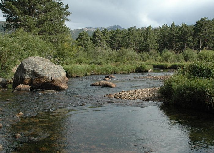 Nature Greeting Card featuring the photograph Rocky Mountain Stream by Kathy Schumann