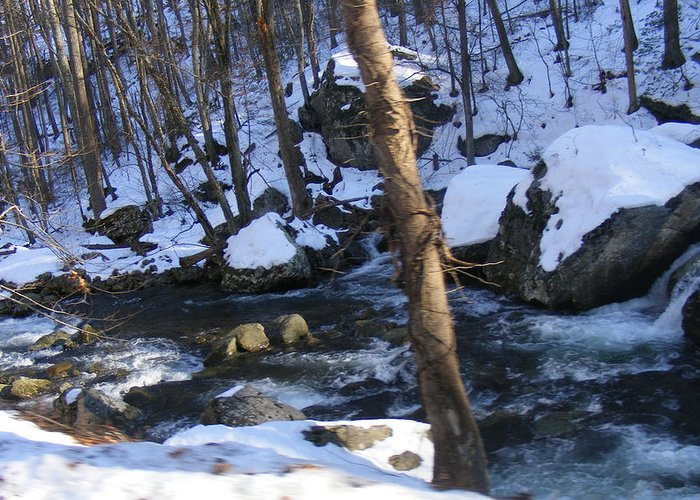 Rocks Greeting Card featuring the photograph Rocky Stream by James and Vickie Rankin