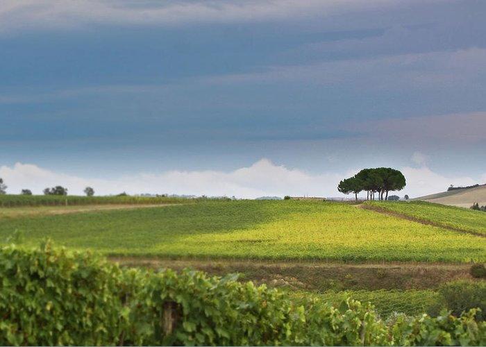 Tuscany Greeting Card featuring the photograph Rolling Tuscany 2 by Patrick English