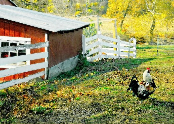 Rooster Greeting Card featuring the photograph Roost by Diana Angstadt