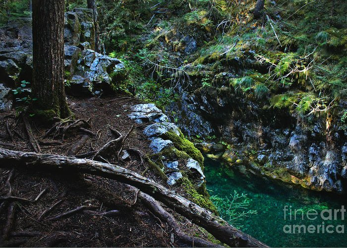 Nature Greeting Card featuring the photograph Rooted In Emerald by Michelle Williamson