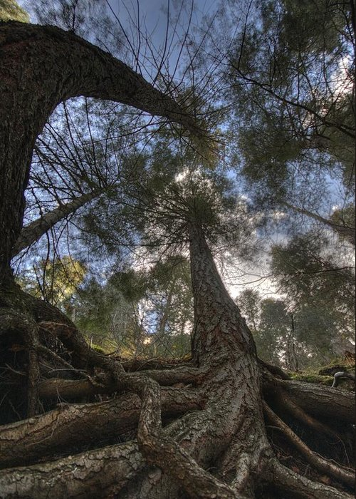 Roots Greeting Card featuring the photograph Roots by Bryan Hochman