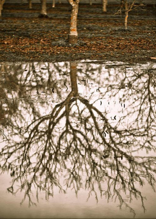 Nature Greeting Card featuring the photograph Roots by Derek Selander