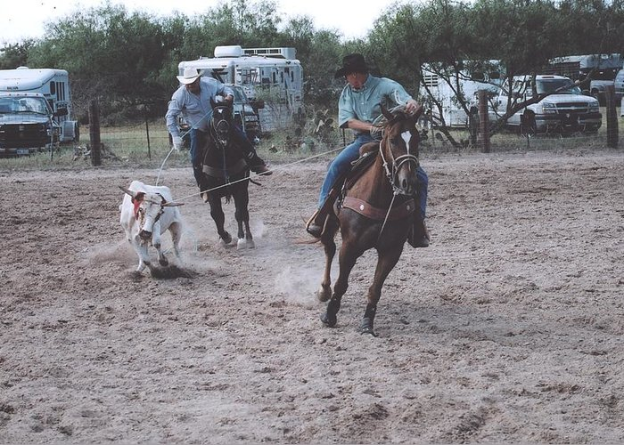 Horses Greeting Card featuring the photograph Roping Event 4 by Wendell Baggett