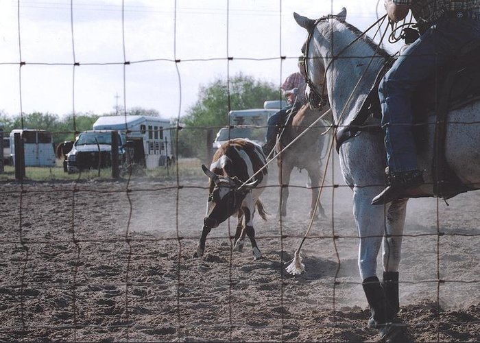 Horse Greeting Card featuring the photograph Roping Event 5 by Wendell Baggett