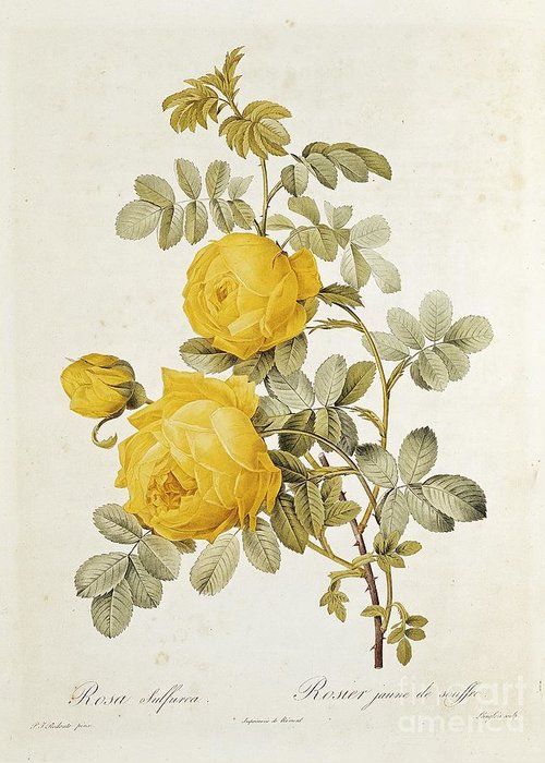 1817 Greeting Cards