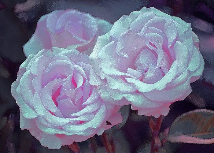 Floral Greeting Card featuring the photograph Rose 118 by Pamela Cooper