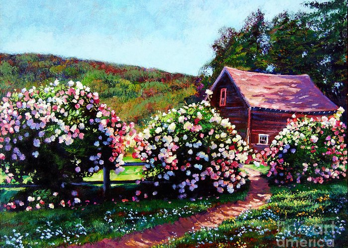 Gardens Greeting Card featuring the painting Rose Bushes by David Lloyd Glover