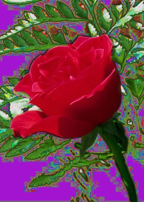 Rose Greeting Card featuring the photograph Rose For You by Tim Allen