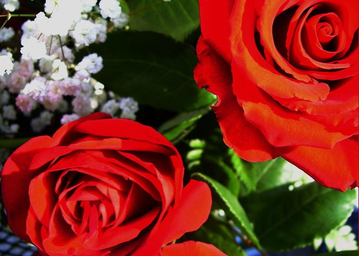 Scape Message. Greeting Card featuring the photograph Rose by Nereida Slesarchik Cedeno Wilcoxon