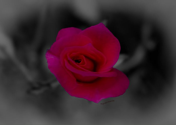 Rose Greeting Card featuring the digital art Rose Of Solitude by DigiArt Diaries by Vicky B Fuller