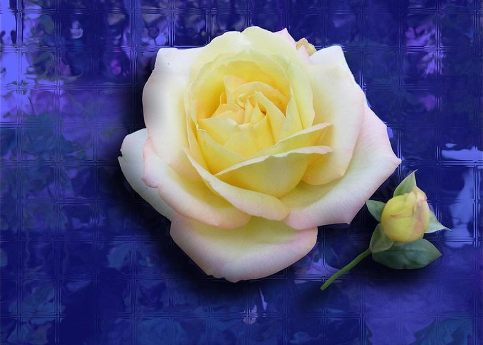 Rose Greeting Card featuring the photograph Rose On Blue by Morgan Rex