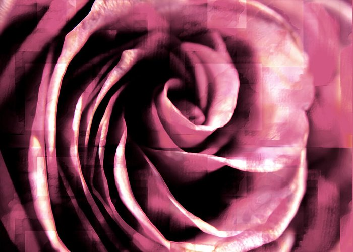Roses Greeting Card featuring the photograph Rose Stamped by Robin Lynne Schwind