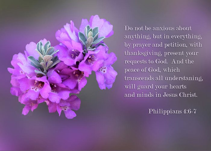 Scripture Greeting Card featuring the photograph Rosy Lavender Sage Blossoms Phil.4 V 6-7 by Linda Phelps