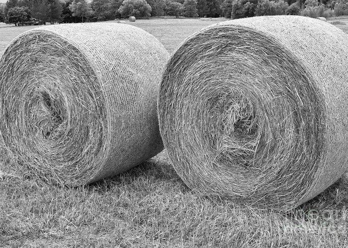 Hay Greeting Card featuring the photograph Round Hay Bales Black And White by James BO Insogna