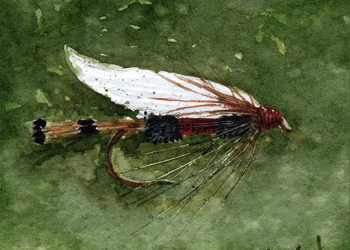 Fly Fishing Greeting Card featuring the painting Royal Coachman Wet Fly by Sean Seal