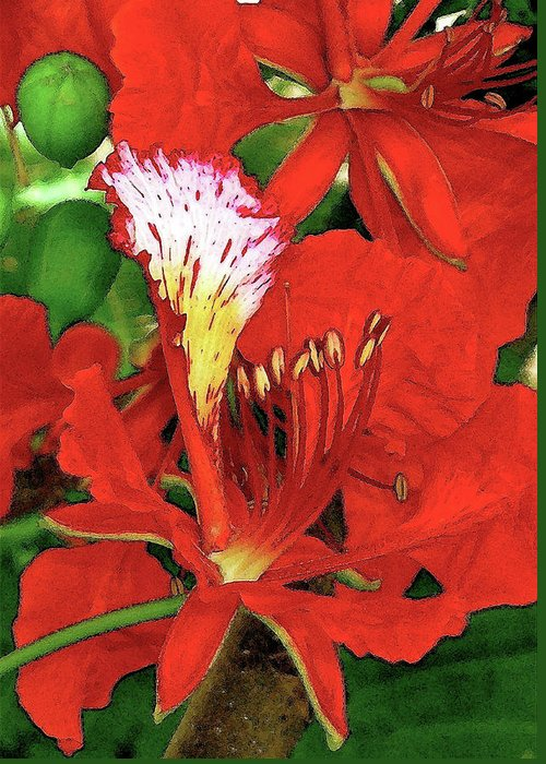 Hawaii Iphone Cases Greeting Card featuring the photograph Royal Poinciana by James Temple