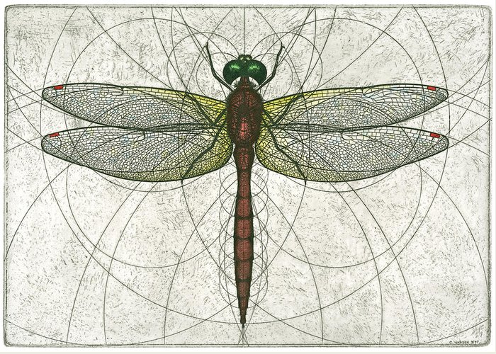 Ruby Greeting Card featuring the painting Ruby Meadowhawk Dragonfly by Charles Harden