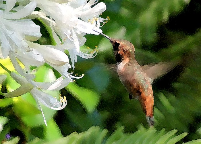 Wildlife Greeting Card featuring the photograph Rufous Hummingbird by Ellen Lerner ODonnell