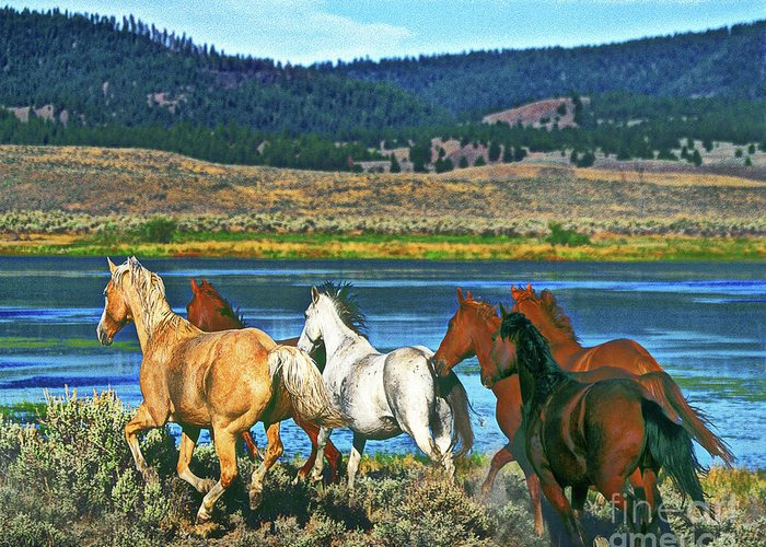 Horses Greeting Card featuring the photograph Run Around The Lake by Don Schimmel