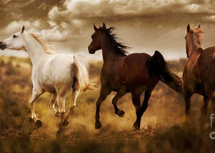 Running Horses Greeting Card featuring the photograph Run For The Hills by Patty Hallman