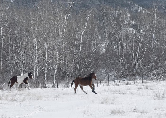 Horses Greeting Card featuring the photograph Run Like The Wind by Peter Olsen