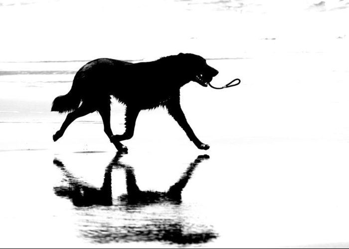 Running Dog Greeting Card featuring the photograph Running Dog by James Hill