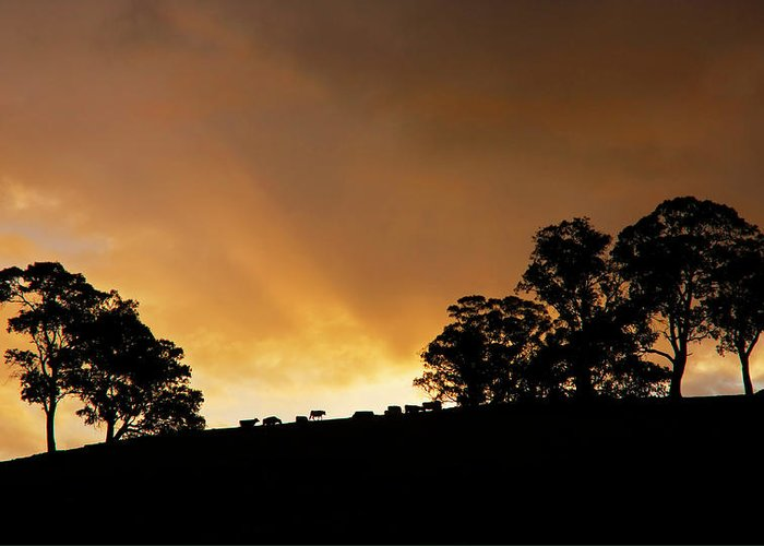 Sunset Greeting Card featuring the photograph Rural Glory by Mike Dawson