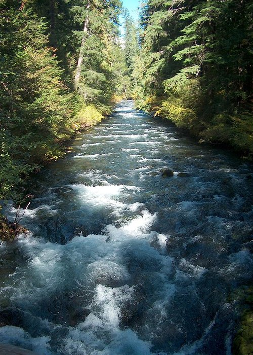 Water Stream Creek Mckenzie River Bend Oregon Greeting Card featuring the photograph Rushing Waters by Janet Hall