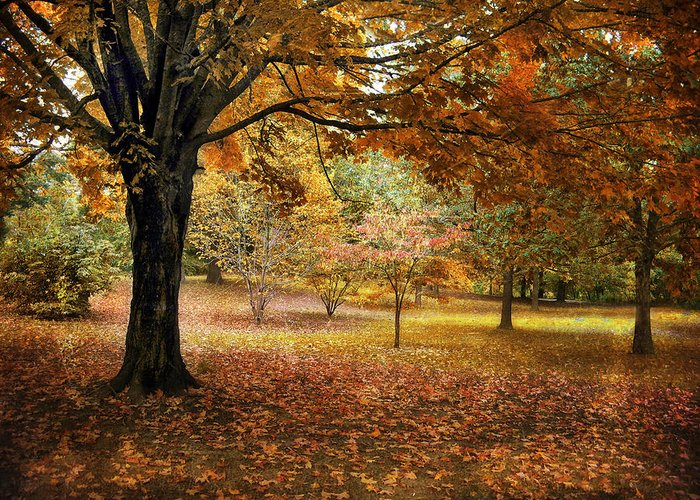 Autumn Greeting Card featuring the photograph Rustic Autumn by Jessica Jenney