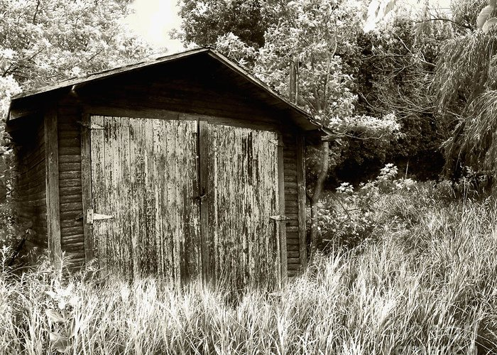 Shed Greeting Card featuring the photograph Rustic Shed by Perry Webster