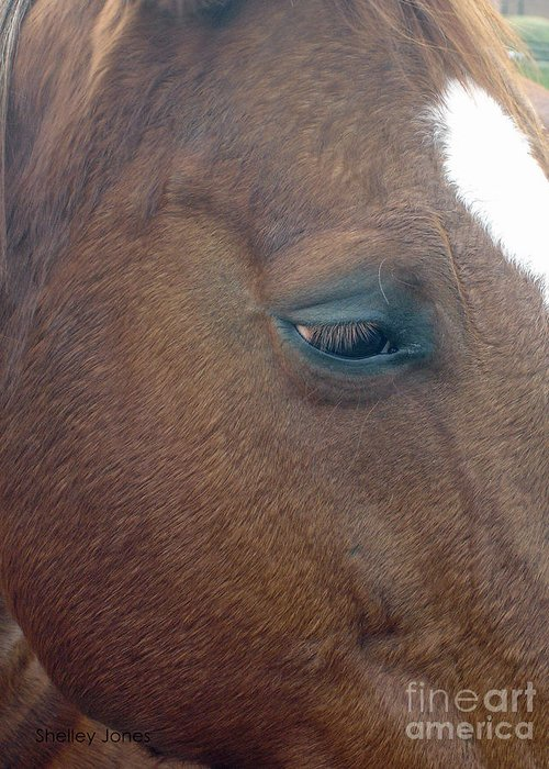 Horse Greeting Card featuring the photograph Sad Eyed by Shelley Jones