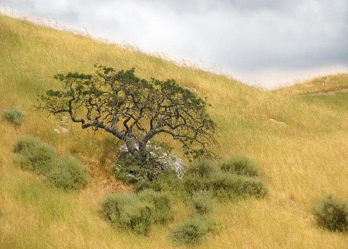 Landscape Greeting Card featuring the photograph Sage Under Oak by Karen W Meyer