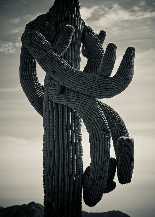 Saguaro Greeting Card featuring the photograph Saguaro Cactus Armed And Twisted by James BO Insogna