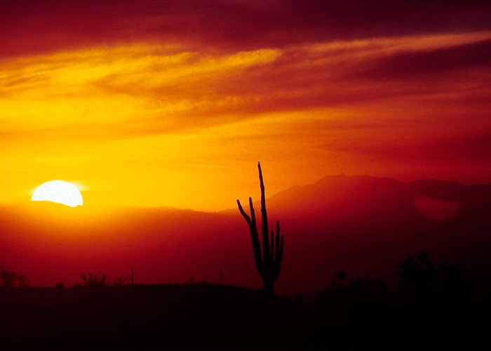 Arizona Greeting Card featuring the photograph Saguaro Sunset by Randy Oberg