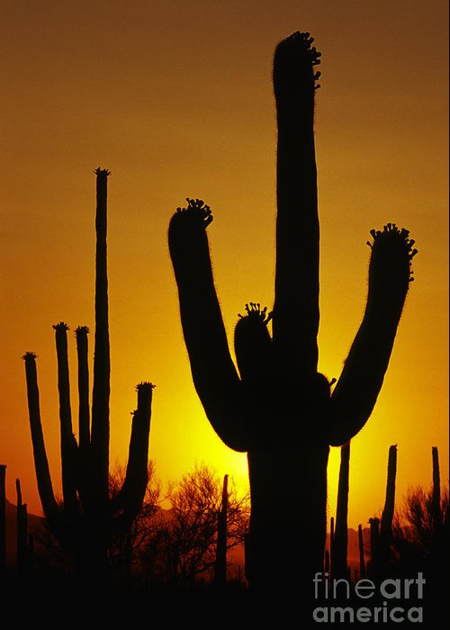 Southwest Greeting Card featuring the photograph Saguaro Sunset by Sandra Bronstein
