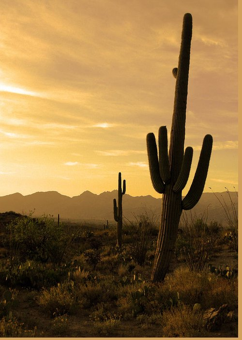 Saguaro National Park Greeting Card featuring the photograph Saguaros At Sunset by Brian M Lumley