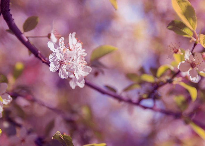 Pink Flower Branch Photographs Greeting Cards