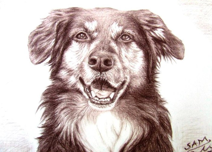 Dog Greeting Card featuring the drawing Sam by Nicole Zeug