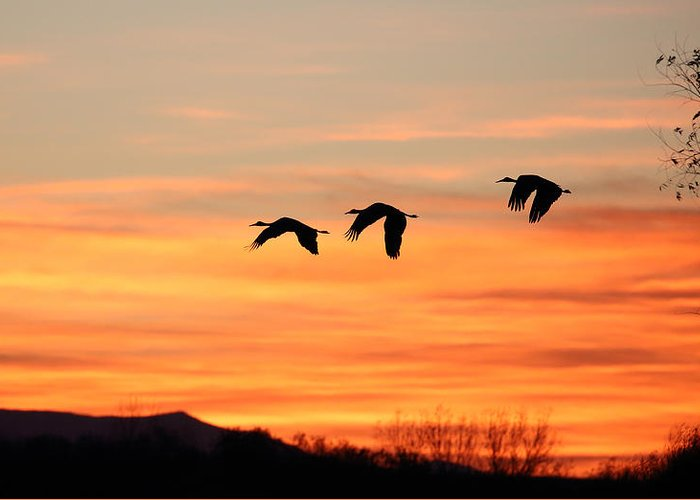 Sandhill Greeting Card featuring the photograph Sandhill Sunrise 2 by Jean Clark