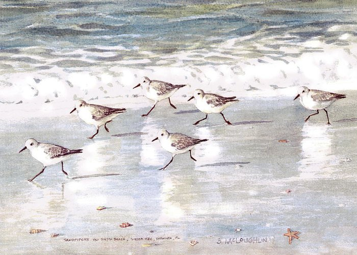 Sandpiper Greeting Cards